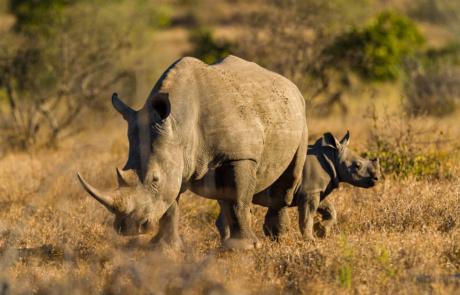 Big Five fotograferen in Zuid Afrika gids