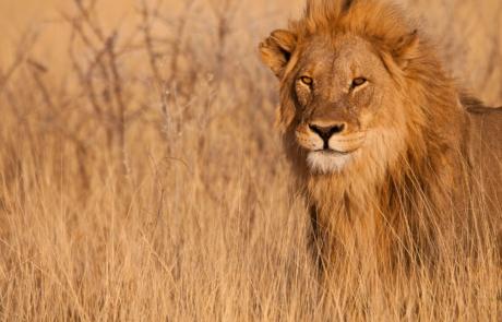 Dierenfotografie Namibie Etosha fotoreis