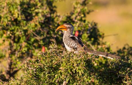 Fotoreis Afrika Zuid-Afrika wildfotografie