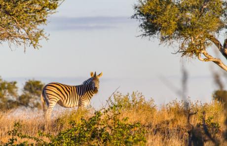 Fotoreis Afrika dieren fotograferen natuurfotografie