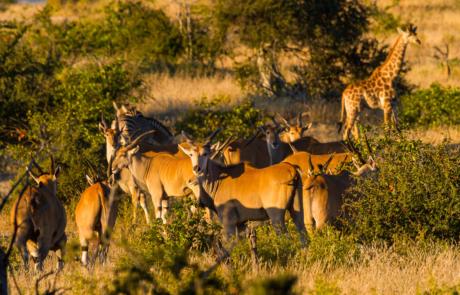 Fotoreis Big Five Zuid-Afrika Kruger