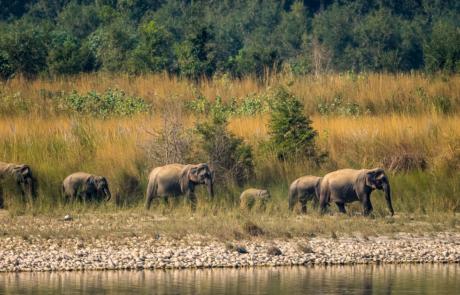 Fotoreis Wildlife fotografie Nepal Olifanten
