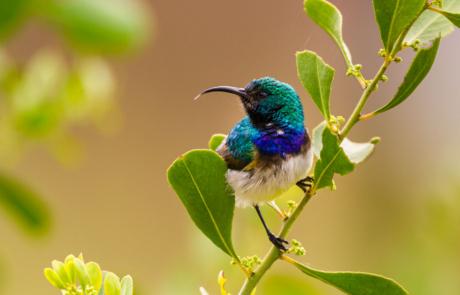 Fotoreis Zuid Afrika Nationale Parken prive parken