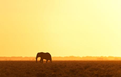 Namibie dierfotografie fotoreis
