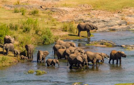Olifanten kudde fotograferen Zuid-Afrika
