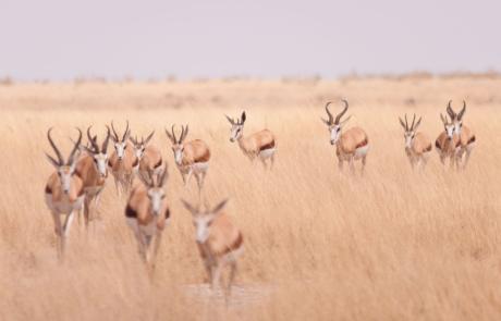 Wildlife fotografie Namibië fotocursus