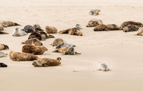 Zeehonden fotograferen Terschelling Dierfotografie