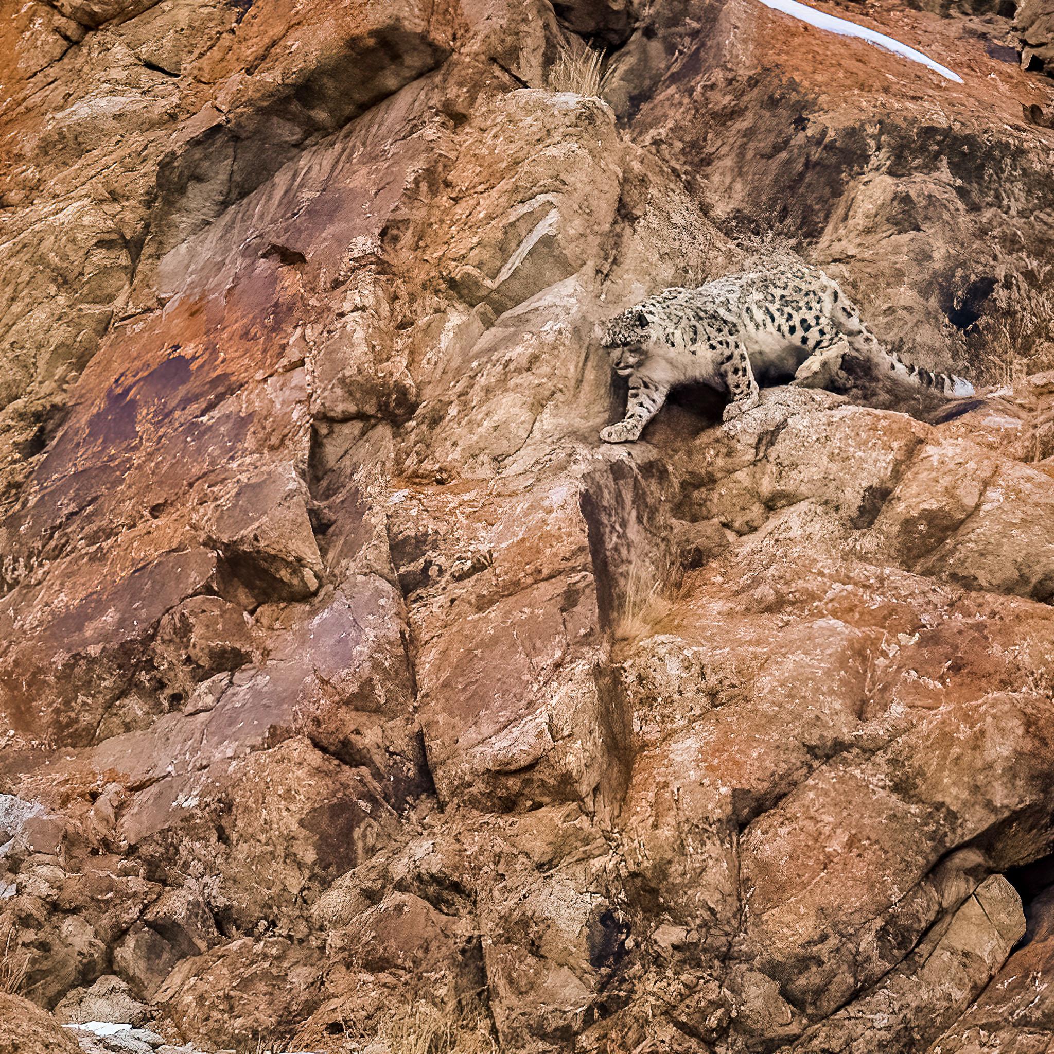 Fotoreis-India-SnowLeopards-Ladakh-Header